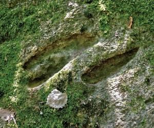 Bilionių (Šilalės r.) pėduotasis akmuo. 2013. Vytenio Almonaičio nuotrauka
