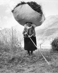 Pepi Merisio. Šienavimas Konjė. 1959