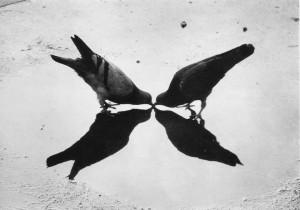 Ernst Haas. Trafalgaro aikštės balandžiai. 1949