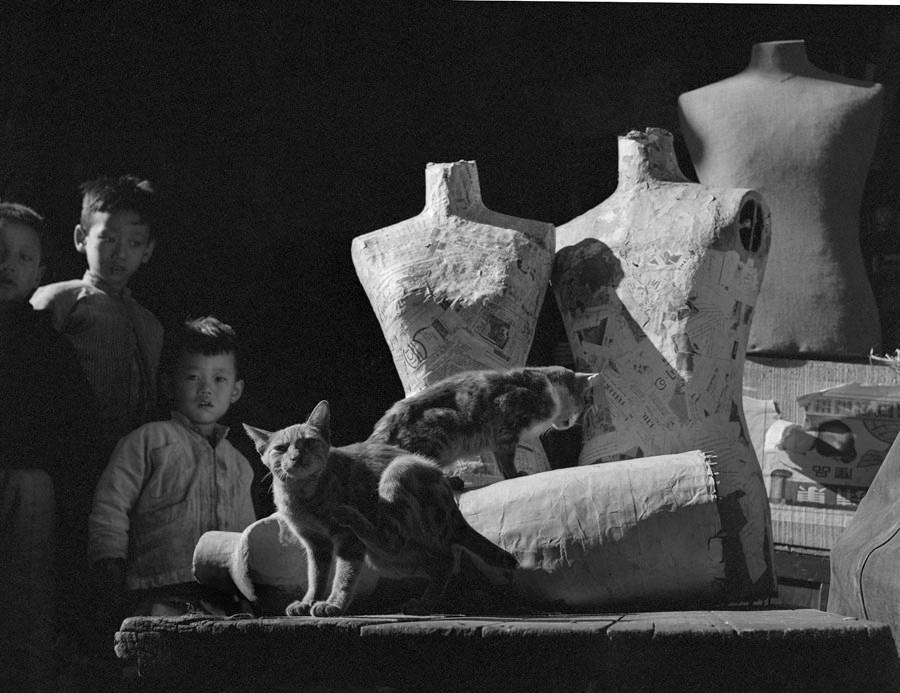 Fan Ho. Vaikai ir katės. 1961