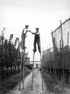 Apynių rinkėjai. Anglija, Kentas. 1928