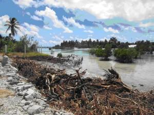 """Mangrovės, tropiniai augalai, amortizuojantys potvynius ir atoslūgius saloje. Priešais jas matomos sutemptos šaknys – """"barikados"""" prieš kylantį vandens lygį. Metodas, kuris kol kas padeda"""