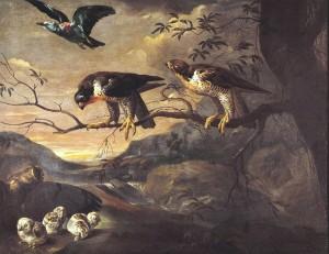 Francis Barlow (apie 1626–1704). Žalvarnis, du sakalai keleiviai ir mažasis apuokas su jaunikliais. Data nežinoma
